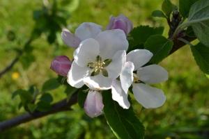 Flowering i Wonderland